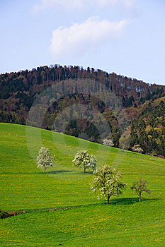 Landscape In The Black-forest, Germany ,Glottertal Royalty Free Stock Photo - Image: 19166465