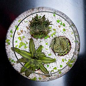 Indoor Plants Stock Image - Image: 19171621