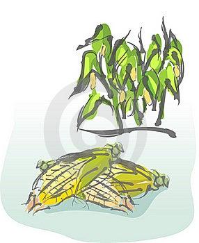Corn Stock Photo - Image: 19171730