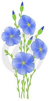 Flower Of Flax (Linum Usitatissimum) Stock Image - Image: 19181721