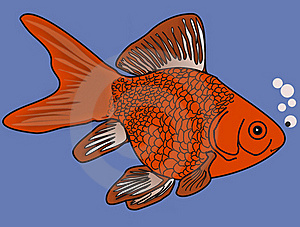 Gold Fish In Blue Waters Royalty Free Stock Photos - Image: 19190528