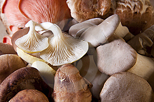 Exotic Mushrooms Royalty Free Stock Images - Image: 19195519