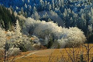 Frozen Landscape Royalty Free Stock Photo - Image: 1926565