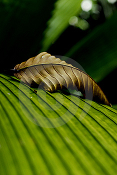 Withered And Living Leaf Stock Photography - Image: 1927572