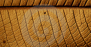 Leaf Structure Royalty Free Stock Photography - Image: 1928397