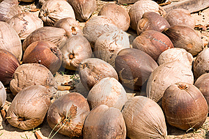 Old Coconuts Royalty Free Stock Photography - Image: 19204747