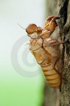 Cicada Slough Stock Photos - Image: 19204973