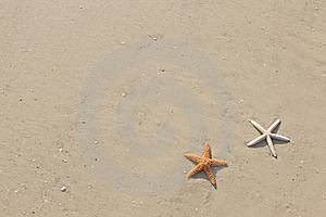 Couple Of Starfish On A Tropical Beach Royalty Free Stock Photography - Image: 19205417