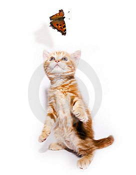 Kitty And Butterfly Stock Photography - Image: 19206032