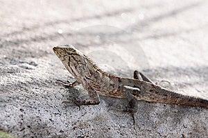 Young Iguana Stock Photo - Image: 19207430