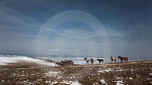 Wild Horse Royalty Free Stock Image - Image: 19217606