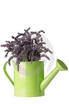 Lavender Flower Stock Photo - Image: 19220800