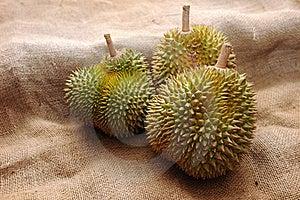 Tropical Durian Fruit Stock Image - Image: 19223181