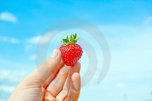 Red  Strawberry In Humand Hand. Stock Photos - Image: 19224713