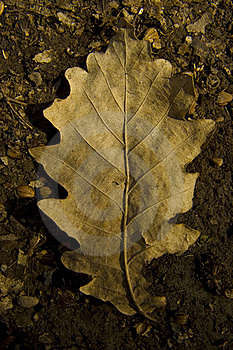 Dried Out Autumn Leaf Stock Photos - Image: 19224833