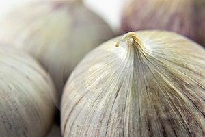 Wild Onion Garlic Royalty Free Stock Image - Image: 19225216