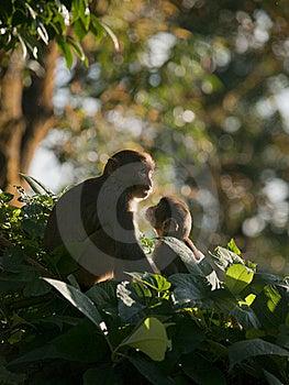 Een Macaquefamilie Die Affectie Voor Eachother Toont Stock Afbeelding - Afbeelding: 19229921