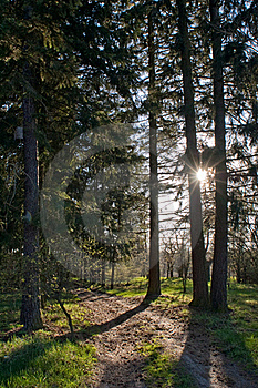 Sunset In The Forest Stock Photos - Image: 19231583