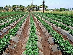 农厂蔬菜 免版税库存照片 - 图片: 19236545