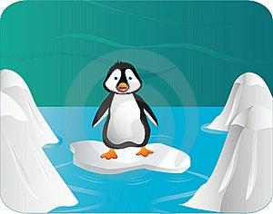 Pinguin Royalty Free Stock Photography - Image: 19247737