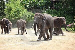 Elephant Herd Stock Photo - Image: 19251860