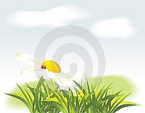 Chamomile And Ladybird Among Grass Stock Image - Image: 19255271