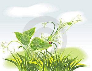 Sprig And Ladybird Among Grass Stock Photos - Image: 19255283