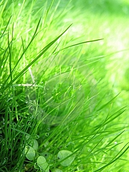 Grass & Dew Stock Photos - Image: 19262153