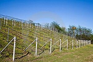 Vineyard Irrigation System Royalty Free Stock Images - Image: 19263789