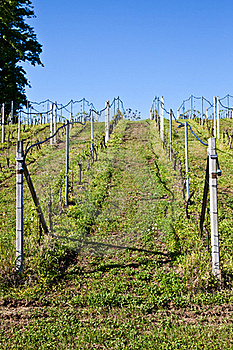 Vineyard Irrigation System Stock Photo - Image: 19263800