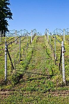Vineyard Irrigation System Stock Photo - Image: 19263800