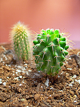 Cactus Stock Photography - Image: 19276092