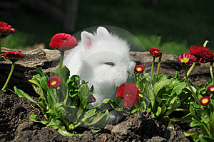 Rabbit Royalty Free Stock Photography - Image: 19289017