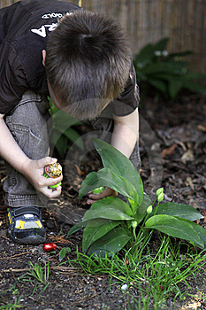 Boy Searching For Easter Eggs Stock Photography - Image: 19289122