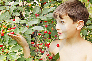 Boy Holds Cherries Stock Photography - Image: 19289812