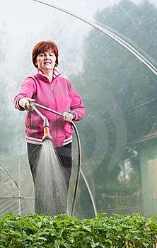 Woman Watering  Seedling Royalty Free Stock Photo - Image: 19294295