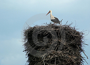 Stork On The Nest Royalty Free Stock Images - Image: 1931869