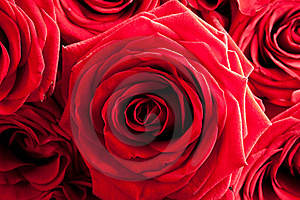 Red Roses Royalty Free Stock Photos - Image: 19304478