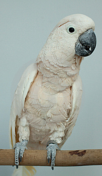 Parrot Stock Photography - Image: 19309702