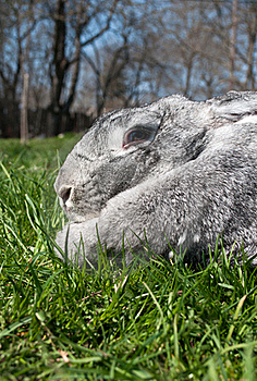 Big And Rabbit On Green Grass Royalty Free Stock Image - Image: 19313466
