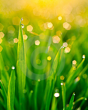 Dew On Blades Of Grass Royalty Free Stock Photos - Image: 19318298