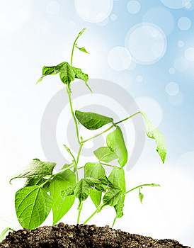 Sprout Royalty Free Stock Photography - Image: 19321917
