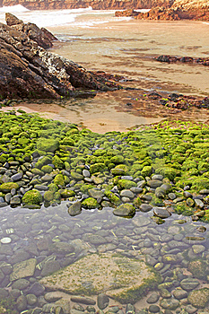 Beach Of Green Stones Stock Images - Image: 19321994