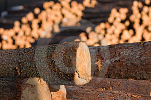 Timber Royalty Free Stock Image - Image: 19331266