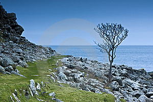 A Tree In Northern Ireland Royalty Free Stock Photos - Image: 19334758