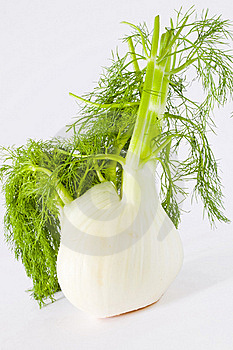 Fennel Stock Images - Image: 19341064