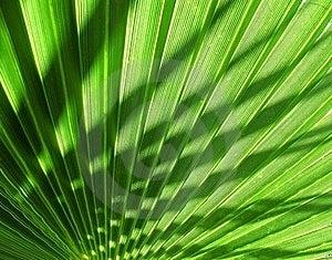 Palm Tree Shade Royalty Free Stock Photo - Image: 19342415