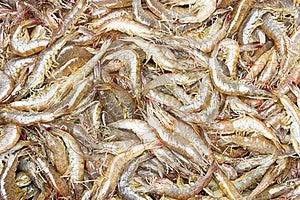 Fresh Shrimp Stock Photos - Image: 19347723