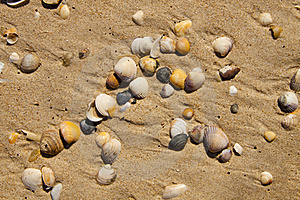 Small Seashells Over Sand Stock Photo - Image: 19348290