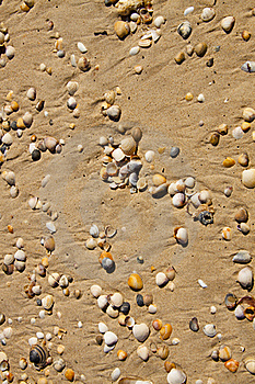 Small Seashells Stock Photos - Image: 19348293